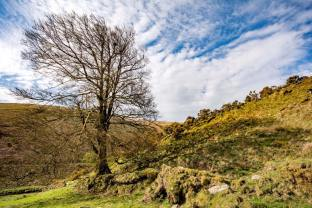 508-a-tree-at-cow-castle-by-phil-beer