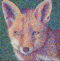 foxss