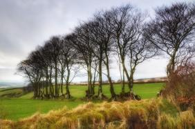 103-linda-thompson-trees-on-exmoor