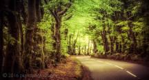 127-paula-kirby-treelined-road-exmoor