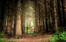 128-paula-kirby-forest-way-exmoor