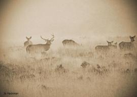 134-jo-hackman-hiding-in-the-mist