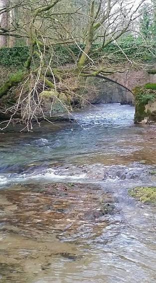 135-thomas-samule-mcdade-last-stop-kayaking-the-river-exe-near-bridgetown