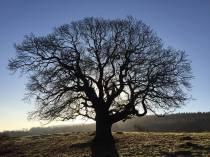 139-rupert-harrison-lone-chestnut-deer-park-dunster-end