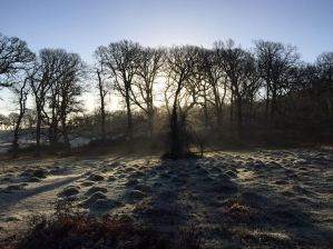 140-rupert-harrison-frosty-dawn-deer-park-carhampton-end