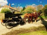 141-stuart-harrison-middle-week-horse-drawn-carriage