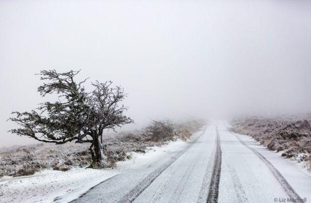 203-liz-mitchell-snow-12-1