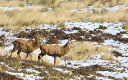 205-kevin-keatley-young-stags-on-exmoor