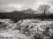 221-leanna-coles-the-first-snow-at-dunkery-hill-gate-late-yesterday-afternoon