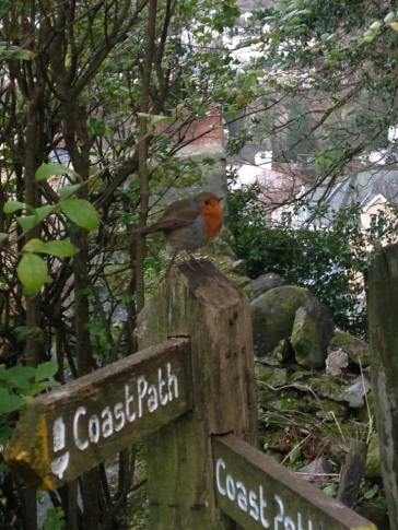 318-julie-wilson-this-lovely-robin-guided-me-on-my-walk-yesterday-from-the-valley-of-the-rocks-all-the-way-to-lynmouth