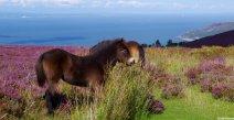 From Moor to Sea... Photo by Croft House B&B Lynton