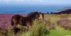 From Moor to Sea... Photo by Croft House B&B Lynton