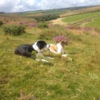 14 Judy Moore Gem and Georgie enjoyed their walk just above Willingford bridge. RIP my beautiful Gem