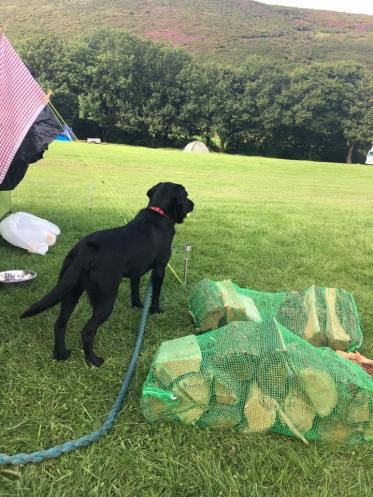 15 Donna Berry Camping in Brendon, chewing logs and watching the scenery! SAPPHIRE