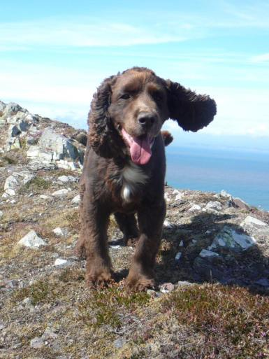20 Julie Scott 10 year old Murphy on this year's annual visit to our Paradise that is Exmoor