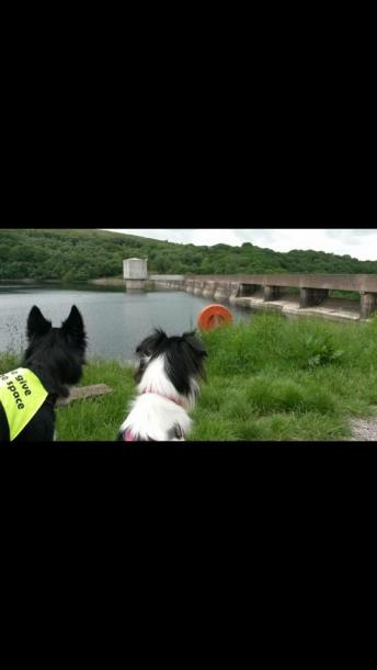 22 Lisa Mortimore Our Collie x and Border Collie (Molly and Jessie) admiring Wimbleball Dam.