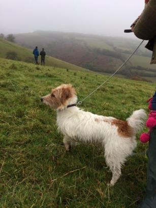 23 Tash Cowley Pips been traveling from Warwickshire to Exmoor since she was a pup and simply loves it!