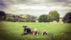 24 Rachel Rice-Ault Benson, Tess & Ghillie ,paws-ing' for thought on the way up to Bats Castle, Dunster Oct 2016
