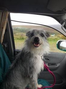 34 Tina-Marie Webber Milly my co pilot across the moor the other weekend!