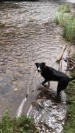 35 Sonja Williams Lexi enjoying the river barle!
