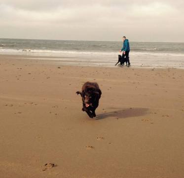 49 Sarah Washington Crazy spaniel on Minehead Beach