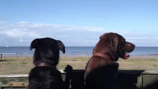 50 Gill Mogford Dunster beach - Tessa & Annie