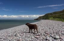 59 Steve Blackborough Molly at Bossington beach.