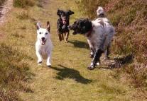 63 Sarah Baker Holly, Kiki & Chloe at Hawkcombe Head