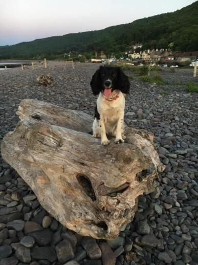 72 Leanna Coles Leila at Porlock Weir....