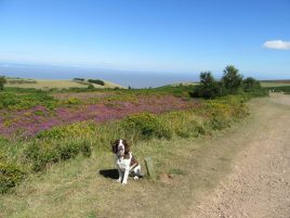 87 Lynn Thorne Our Rosie enjoying the sun on North Hill, Minehead. Image may contain- sky, tree, dog, outdoor and nature
