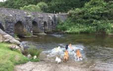 90 Cindy Govier Winter Lanacre Bridge. Fleur, Bert, Harvey, Bracken, Kimmy, Pip & Toby
