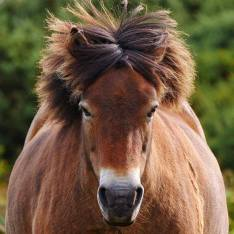 Spotted on Instagram: Meet the locals but remember #exmoor rule number #1 ...walk around obstinate #exmoorponies who are having a #badhairday 😂 OK...we'll go the other way...#outandabout for a stroll with the Mole 🐾 #walkies #exmoorpony #wildhorses #pony #ponies #ponysofinstagram #exmoornationalpark #somerset #badhairdays #lumixgh5 #lumixuk #snapseed #mobileedit #nationalparks #getoutside #wildlifephotography #southwestcoastpath #theshire #meetthelocals #wildhorse 📷: @exm.360