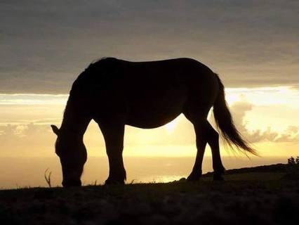 Exmoor pony 😍 - #exmoorpony#exmoor#photography#photograph#photo#photographer#photoshoot#walking#walk#nature#shootwhatyoulove#familylife#alevel#alevelphotography 📷: @sarahs.xphotography