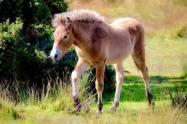 0831-01 Maggie Carroll Foal