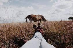 ↡☾Relaxing moment☾↡ #exmoor #northdevon #photography #photographer #horse #horses #horsesofinstagram #exmoorpony #wildhorse #summer #photoshoot #photooftheday #legs #view #wild #wildlife #heather #moor 📷: @sophiasmithy