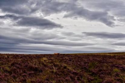 0904 Linda Thompson Grey skies over Exmoor