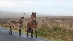 0917 Paul Steven Ponies in the mist