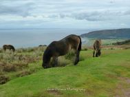 0919 Anne Parsons Top of Porlock Hill - last week