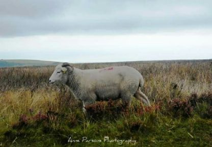 0927 Anne Parsons On moorland above Exford