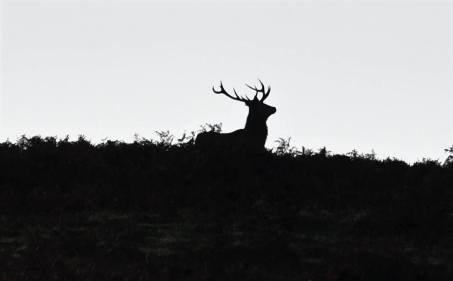 0929 Ed Browning New morning, Exmoor