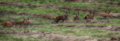 0930 Fred Barrow Stag
