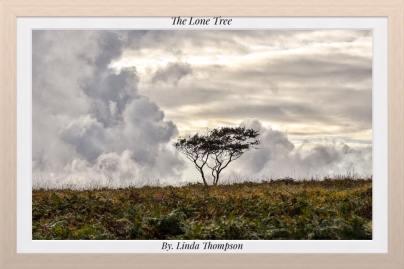 0930 Linda Thompson The Lone Tree