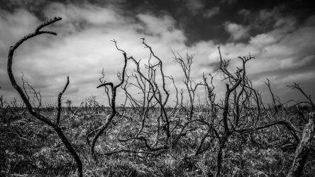 Scorched Earth. A black and White shot of the burnt stubble on Haddon Hill.