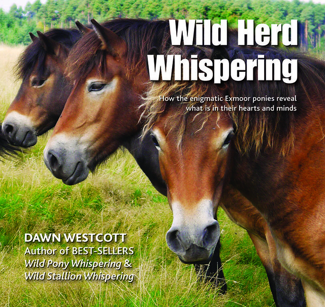 Wild Herd Whispering: New book out about Exmoor Ponies