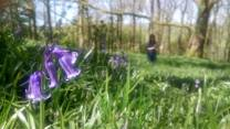 Angela Wensley 01