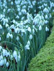 Angela Wensley 02