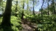 Angela Wensley 03