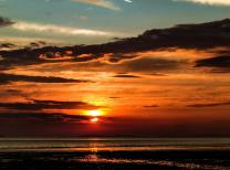 Bear Welsh 01