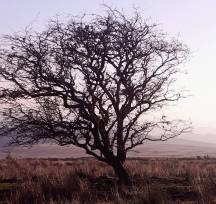 Gail Ridd Jones 03