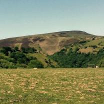 Julie Beard 02